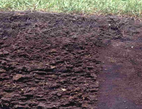 Tanah Histosol – Penjelasan, Karakteristik dan Contoh