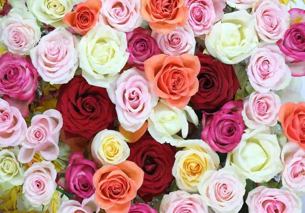 Arti jumlah mawar