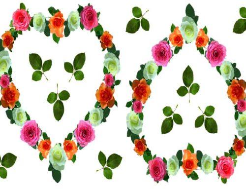 Arti Warna Mawar – Makna Simbolis Bunga Mawar