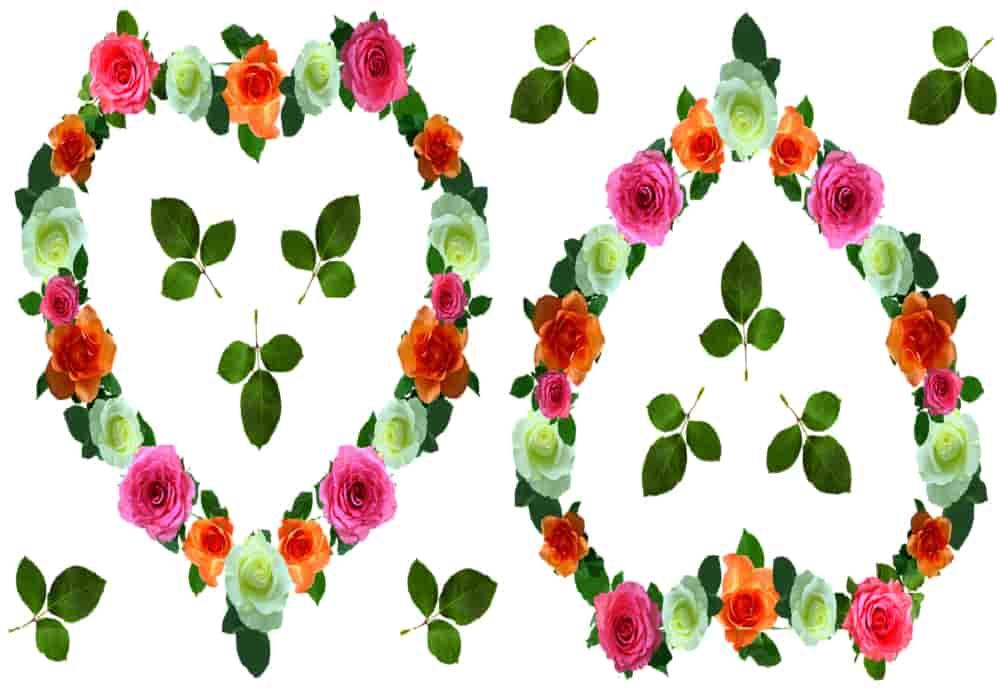 Arti Warna Mawar Makna Simbolis Bunga Mawar Yang Berbeda Beda