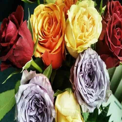 Makna arti warna mawar