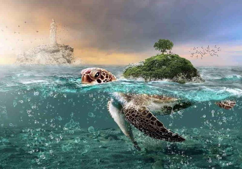 Arti mimpi kura-kura