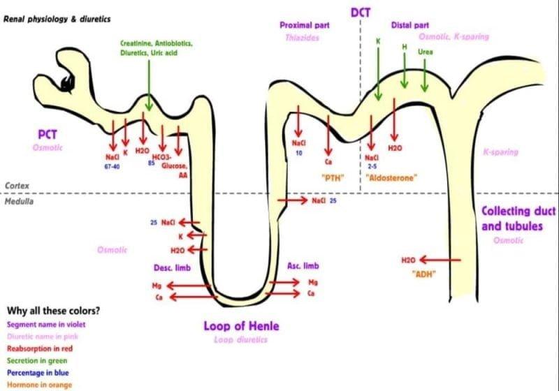 Diuretik Obat Hipertensi (Tiazid, Loop, Agen penahan kalium, Antagonis aldosteron)