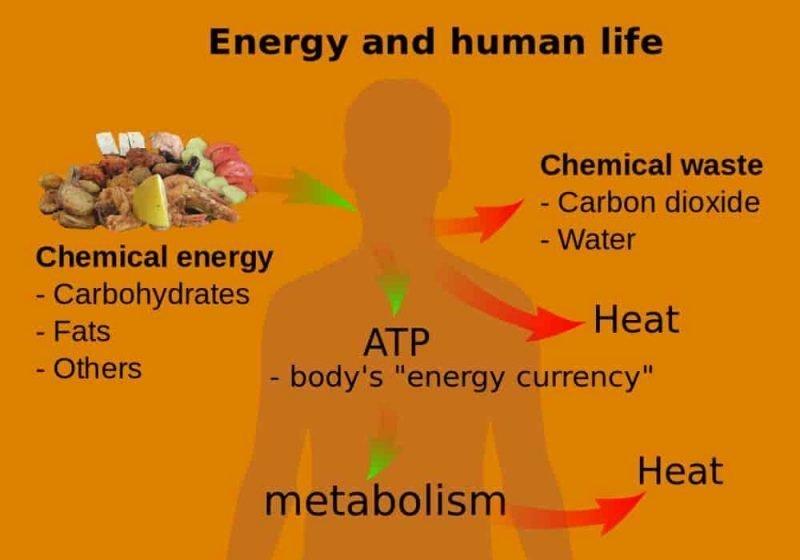 Homeostasis energi dan kehidupan