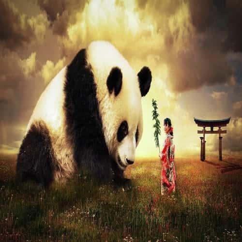 Arti mimpi panda