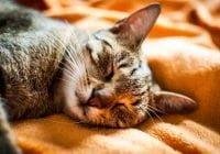 Arti Mimpi Kucing - Tafsir, Makna dan Penjelasan Arti Mimpi