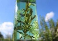 Obat Wasir Alami Dari Tumbuhan