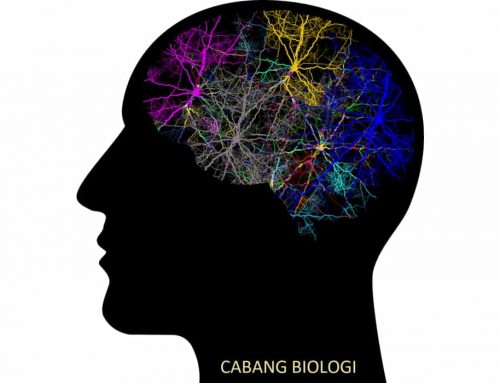 Cabang Biologi – Pengertian dan Contoh Ilmu Yang Mempelajari Apa?