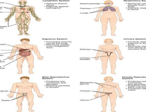 10 Sistem Organ – Fisiologi Manusia dan Konsep Homeostatis