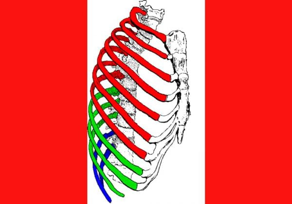 Tulang Rusuk Manusia Berjumlah 24 (12 Pasang) - 3 Jenis Rusuk / Iga