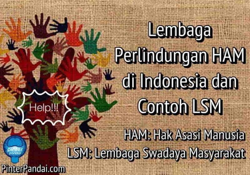 Lembaga Perlindungan HAM di Indonesia dan Contoh LSM