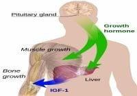 Hormon Pertumbuhan Manusia Somatotropin