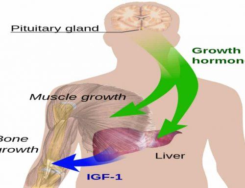 Hormon Pertumbuhan Manusia Somatotropin – Obat, Efek Samping, Dosis