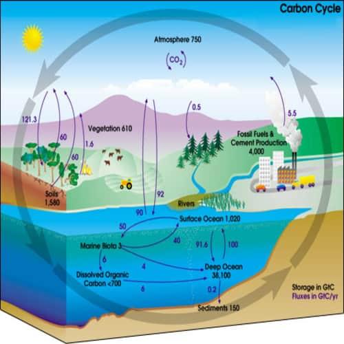 Diagram siklus karbon