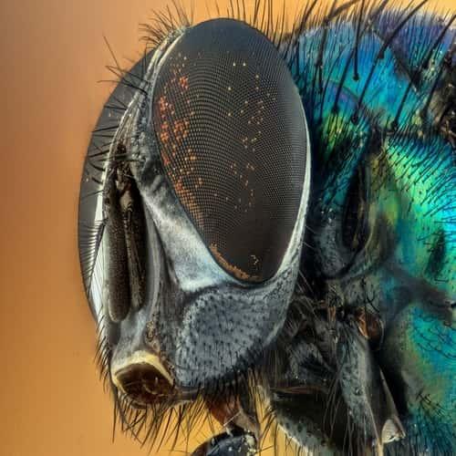 Arti mimpi lalat