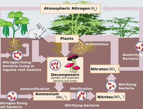 Biogeokimia – Daur Biogeokimia: Fosfor, Air, Belerang/Sulfur, Karbon, Oksigen, Nitrogen – Contoh Soal dan Jawaban