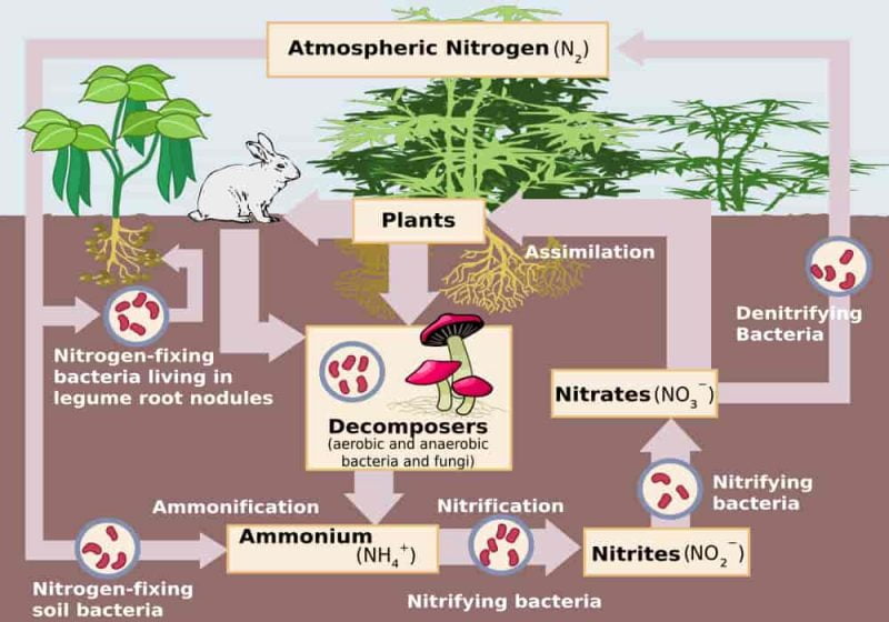Biogeokimia - Daur Biogeokimia: Fosfor, Air, Belerang/Sulfur, Karbon, Oksigen, Nitrogen dan Contohnya