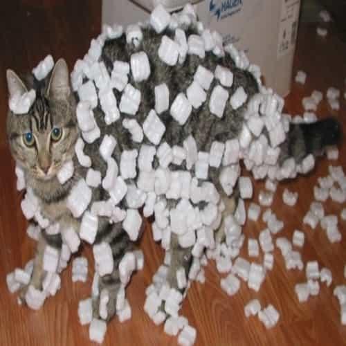 Kucing kena listrik statis - penyebab listrik statis