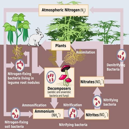Siklus nitrogen biogeokimia