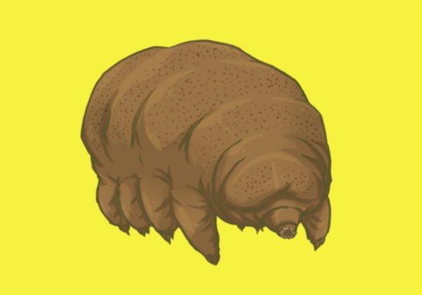 Tardigrade Hewan Kecil Yang Susah Mati - Dikenal dengan julukan Beruang Air