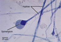 Metode reproduksi jamur