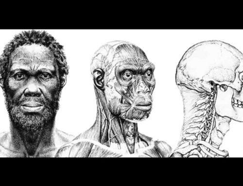 Homo Sapiens Idaltu (Herto Man) – Manusia Purba – Ciri-Ciri dan Penjelasan