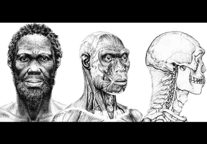 Homo sapiens idaltu manusia purba herto man