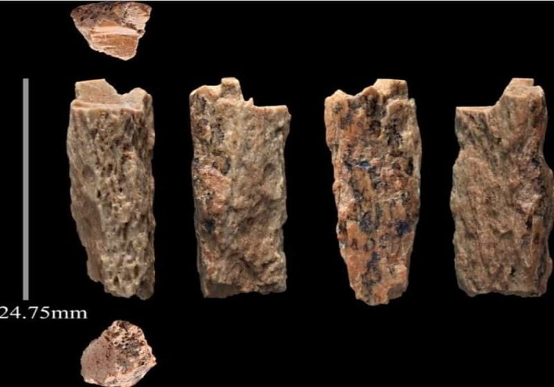 Tulang manusia purba hominini denisova