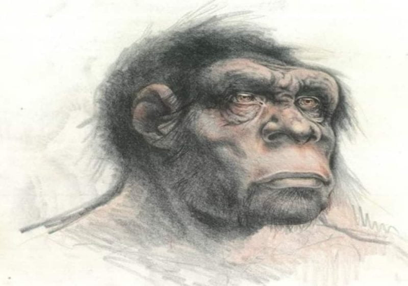 Homo cepranensis manusia purba