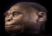 Homo floresiensis manusia purba indonesia pria