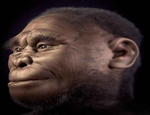 Homo Floresiensis (Flores Man) dari Indonesia – Manusia Purba – Ciri-Ciri dan Penjelasan