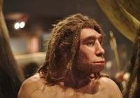 Homo neanderthalensis manusia purba