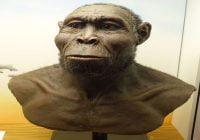 Homo rudolfensis manusia purba