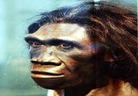 Manusia purba homo erektus Homo erectus