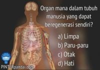 Organ dalam tubuh manusia yang dapat beregenerasi