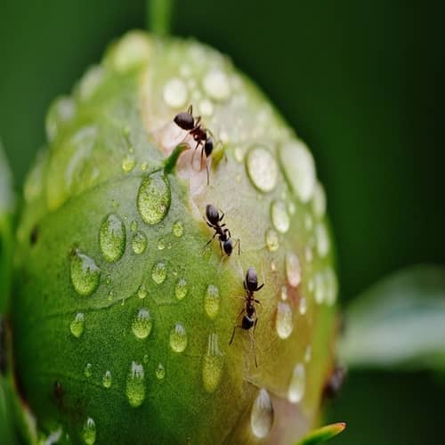 Arti mimpi semut