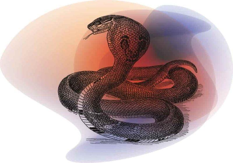 Arti mimpi ular kobra