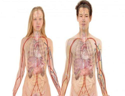 Allostasis: Allostasis vs. Homeostasis: Perbedaan, Hubungan dan Contoh