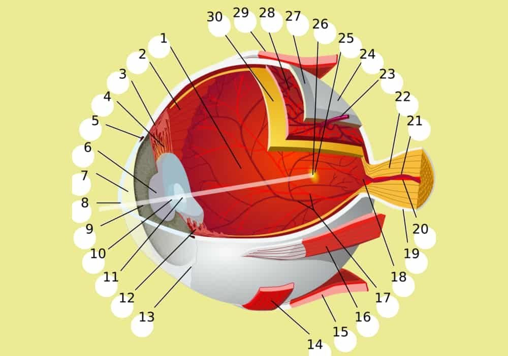bagian mata dan fungsi