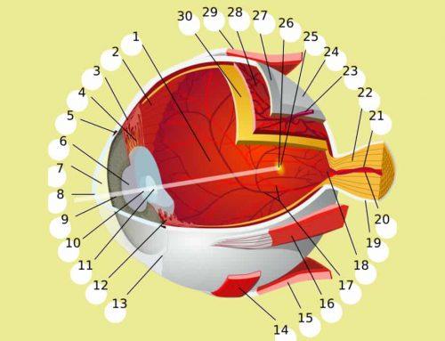 Bagian Mata | Memahami Berbagai Anatomi dan Fungsi Bagian Mata