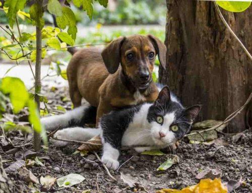 Binatang Paling Setia | Hewan Peliharaan Paling Setia Kepada Manusia