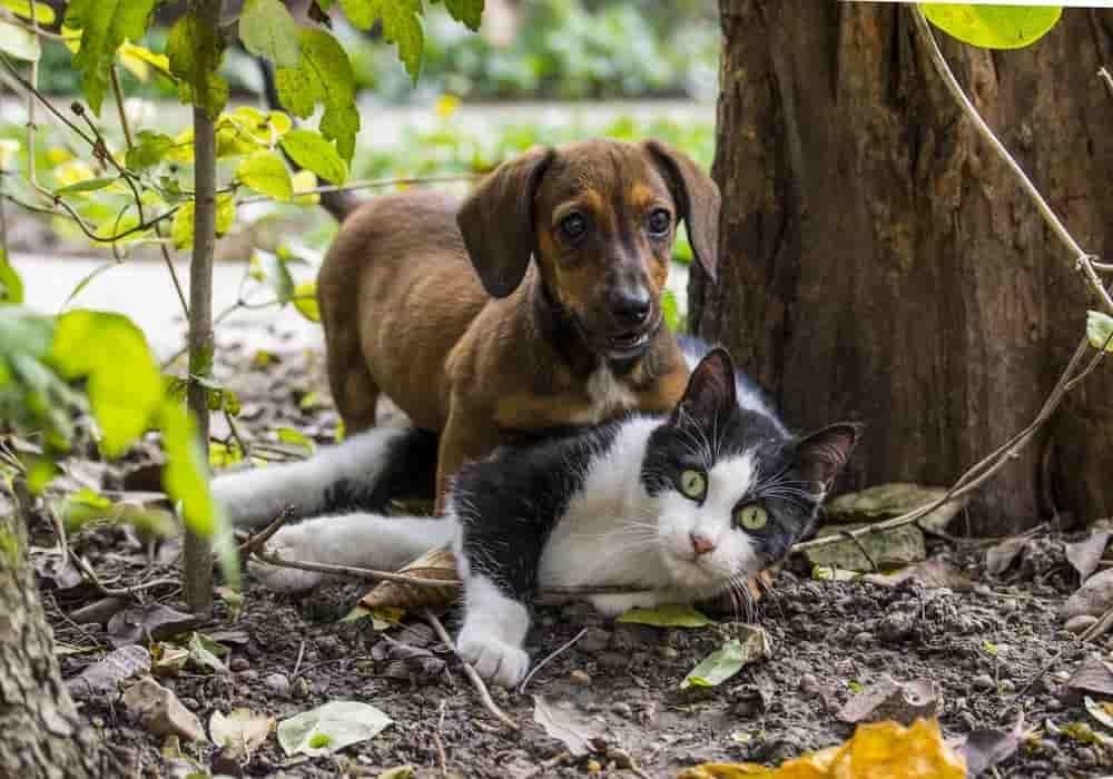 Binatang Paling Setia Hewan Peliharaan Paling Setia Kepada Manusia