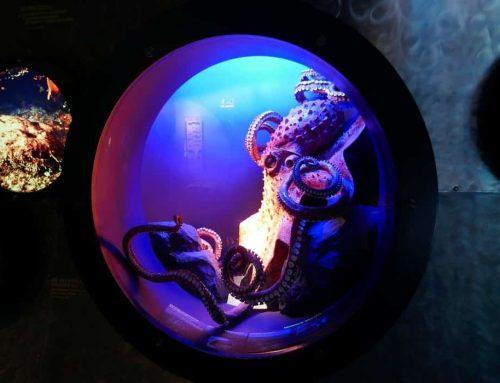 Arti Mimpi Gurita (Octopus)