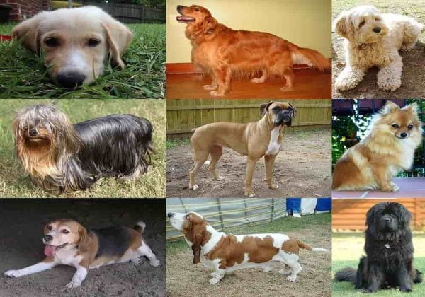 Hari Anjing Sedunia (World Dog Day) Kapan? Apa Gunanya?