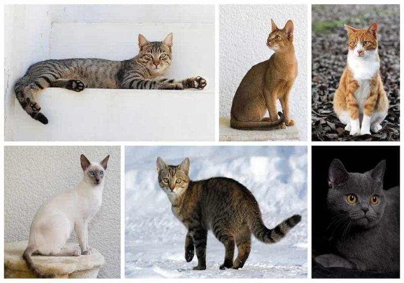 Hari Kucing Sedunia (World Cat Day) Kapan? Apa Gunanya?