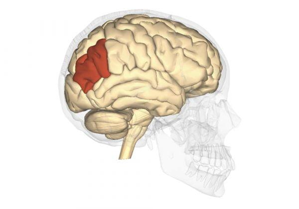Sindrom Gerstmann (sindrom gyrus sudut)   Gejala, Penyebab, Diagnostik, Pengobatan